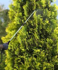 обрабатывать кроны деревьев при использовании брандспойта телескопического (удочки) skrab